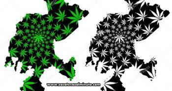 cannabis zacatecas mariguana